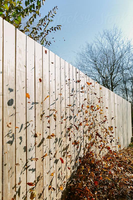 Leaf Blowin' by Raymond Forbes LLC for Stocksy United