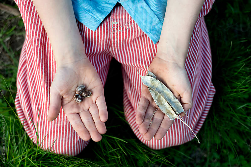 Child's hands hold beans and their shell by Cara Dolan for Stocksy United