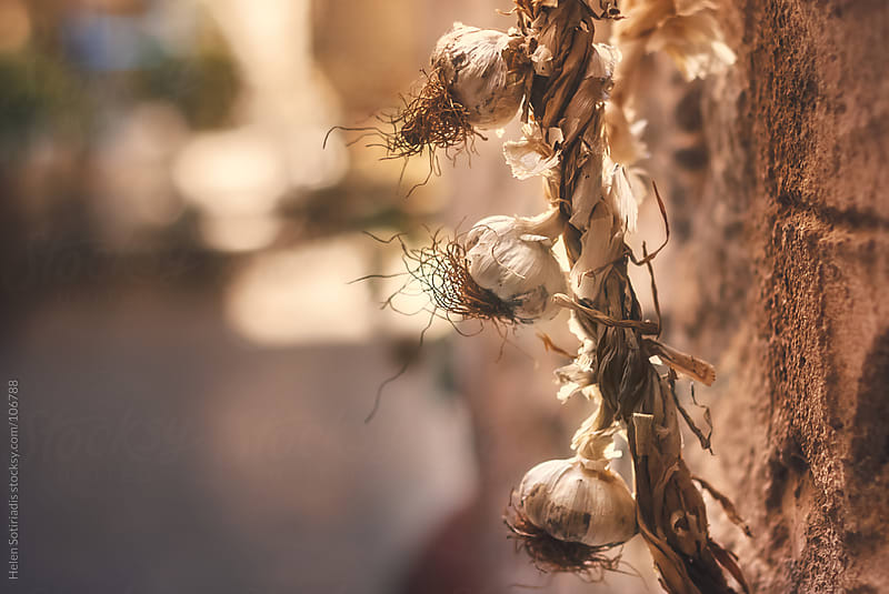 Garlic Hanging on a Wall by Helen Sotiriadis for Stocksy United
