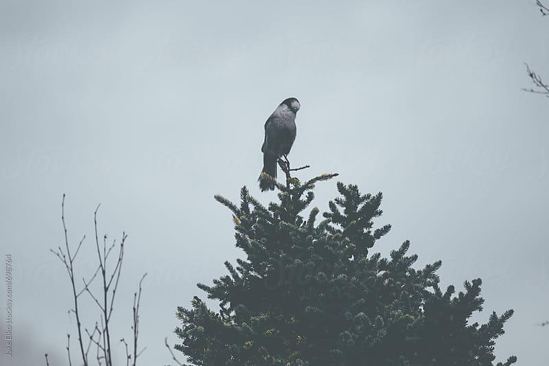 Dark Bird by Jake Elko for Stocksy United