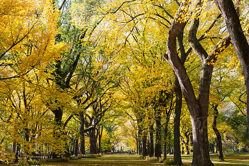 Autumn view of Central Park. New York City. by Kristin Duvall for Stocksy United