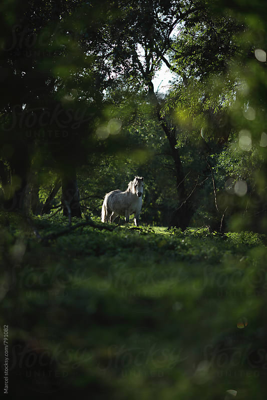 White pony appearing between the trees by Marcel for Stocksy United