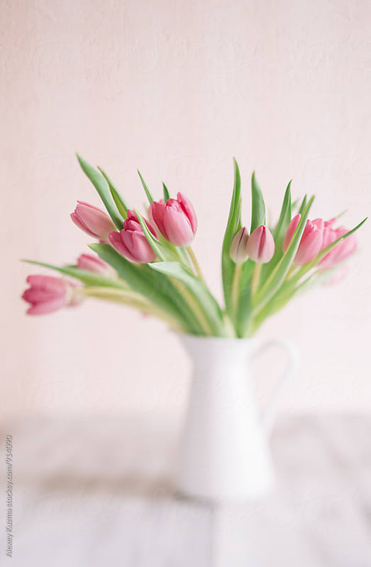 fresh tulips by Alexey Kuzma for Stocksy United