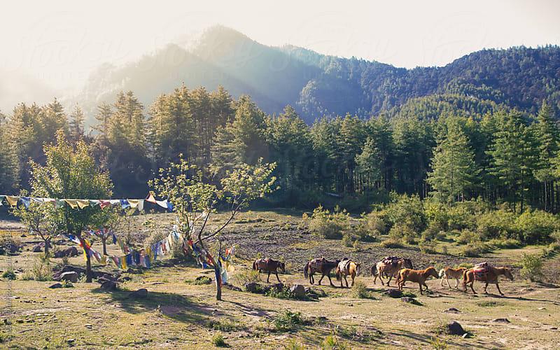 Morning Landscape in the Kingdom of Bhutan by Gabriel Diaz for Stocksy United