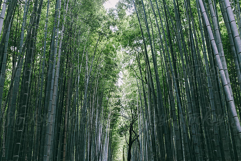 Arashiyama Bamboo Grove, Japan by Daria Berkowska for Stocksy United