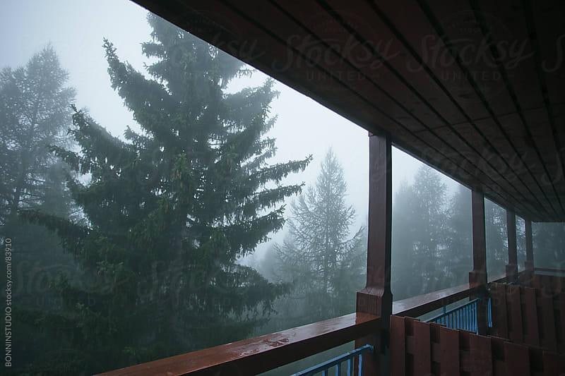 Misty trees landscape. by BONNINSTUDIO for Stocksy United