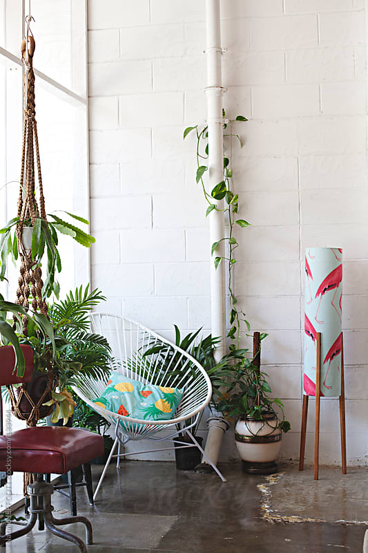 collection of plants in a designers light filled studio by Natalie JEFFCOTT for Stocksy United