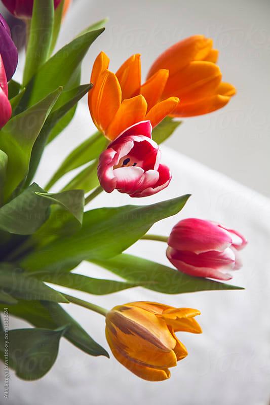 My Lovely Tulips by Alie Lengyelova for Stocksy United