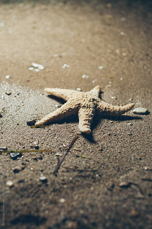 Starfish by Branislav Jovanović for Stocksy United