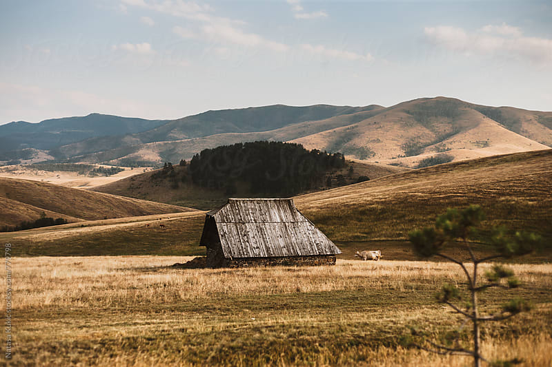 Pastures landscape  by Natasa Kukic for Stocksy United
