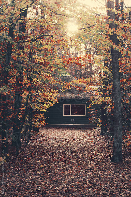 A remote wooden cottage found in a sunny autumnal forest in The Netherlands by Kaat Zoetekouw for Stocksy United