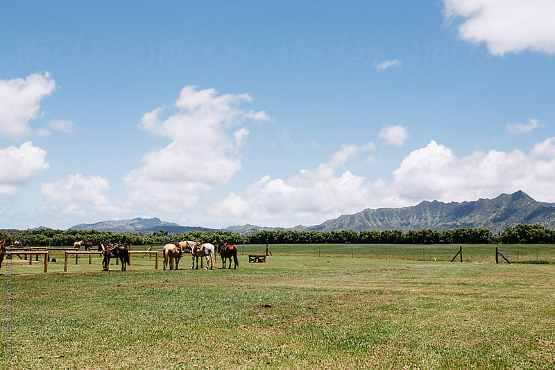Horses in Kauai by Ryan Tuttle for Stocksy United