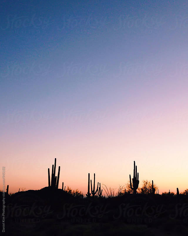 Silhouette of cactus against sunset sky by Daniel Kim Photography for Stocksy United