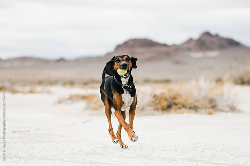 Dog Running by Isaiah & Taylor Photography for Stocksy United