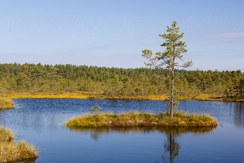 Single tree on a small island in a raised bog by Melanie Kintz for Stocksy United