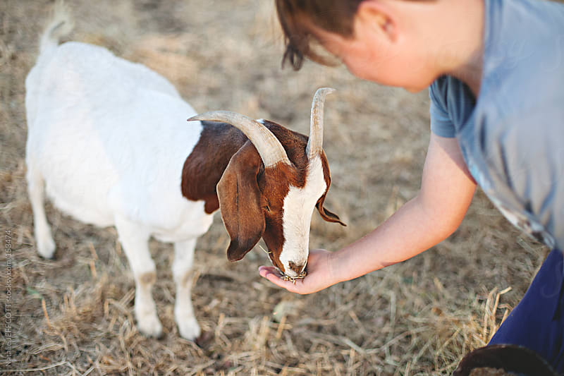 A young boy feeding a goat in the countryside by Natalie JEFFCOTT for Stocksy United