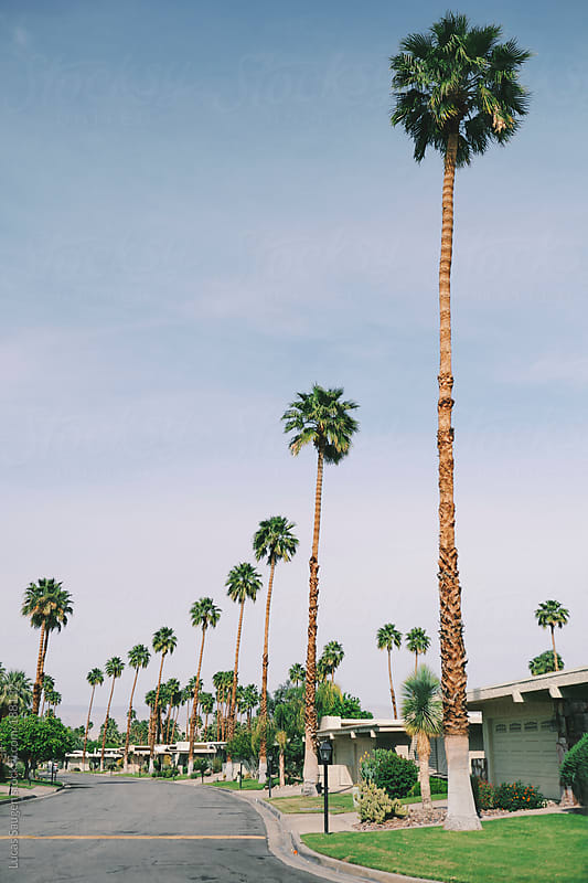 Palm Tree lined street in Palm Spring, California by Lucas Saugen for Stocksy United