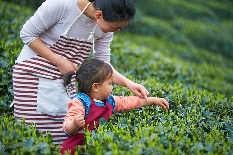 little girl with her mother in the tea farm by cuiyan Liu for Stocksy United
