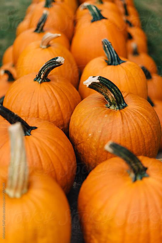 pumpkins by Melanie DeFazio for Stocksy United