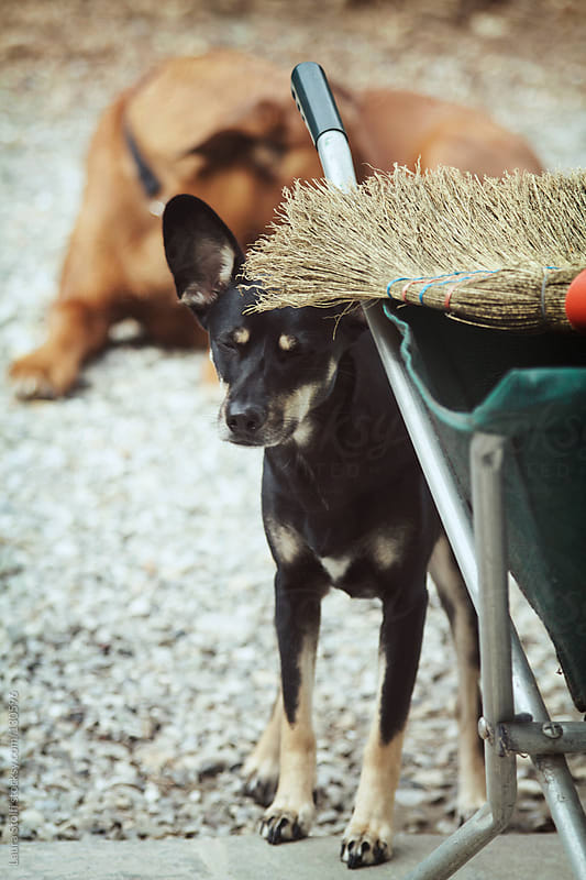 Little dog hiding under broom with eyes closed by Laura Stolfi for Stocksy United