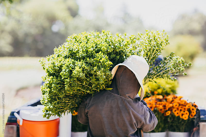Worker loading flower bouquets onto a truck by Lior + Lone for Stocksy United