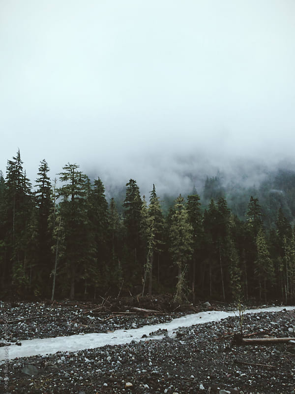 Foggy River Landscape by Kevin Russ for Stocksy United