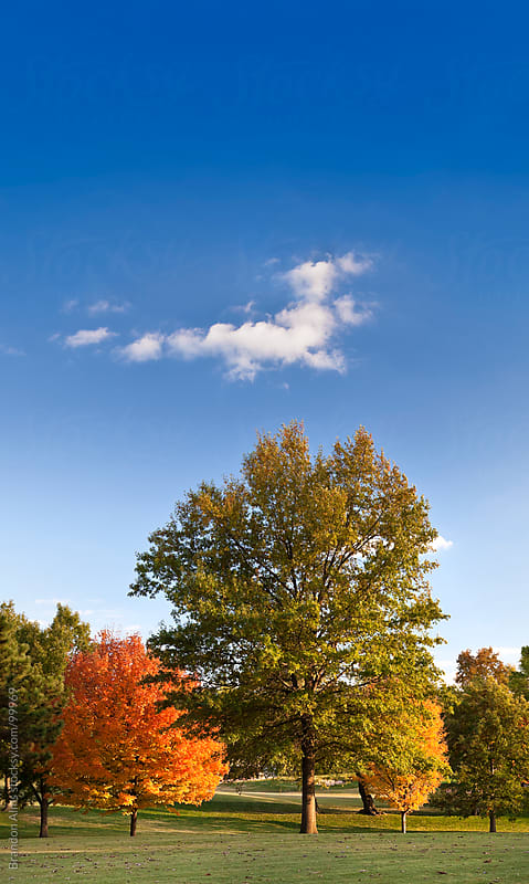 Autumn Trees Landscape with Blue Sky by Brandon Alms for Stocksy United