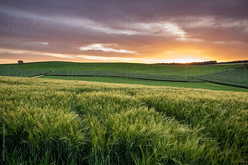 Kraichgau Fields at Sunset by Andreas Wonisch for Stocksy United