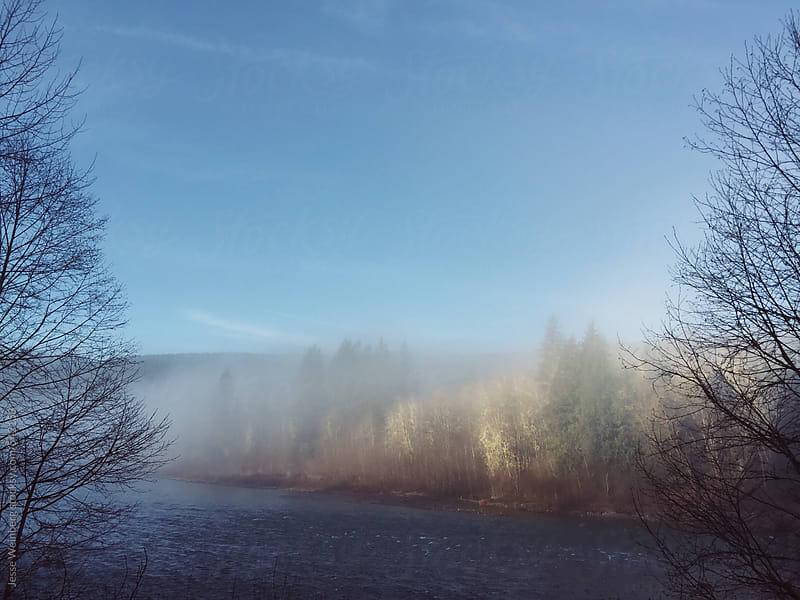 Misty Landscape by Jesse Weinberg for Stocksy United