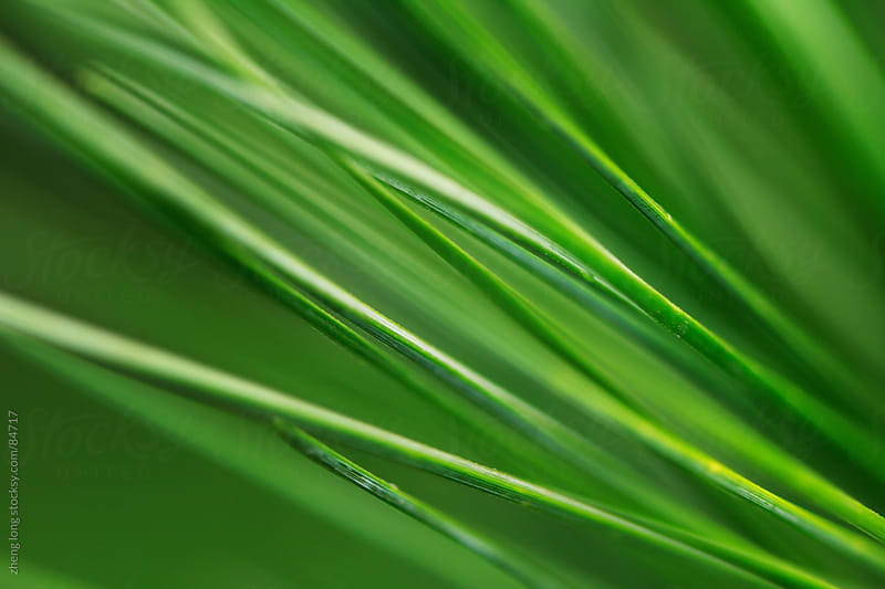 Abstract  pine needles by zheng long for Stocksy United