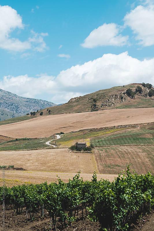 Fields on the Hills of Sicily by Branislav Jovanović for Stocksy United