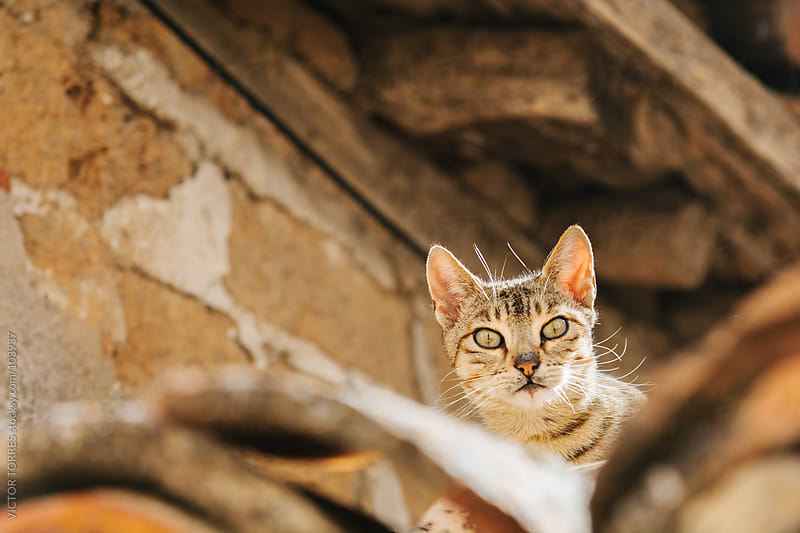 Cat on the Roof by VICTOR TORRES for Stocksy United