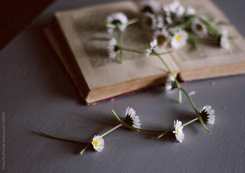 Daisy Chain and a Book by Helen Rushbrook for Stocksy United