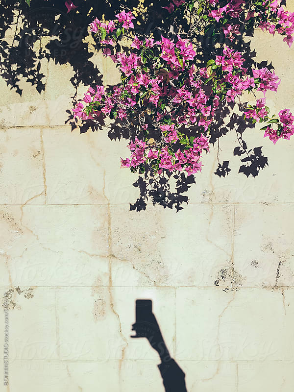Man taking photos with smartphone of a pink plants. Mobile photography. by BONNINSTUDIO for Stocksy United