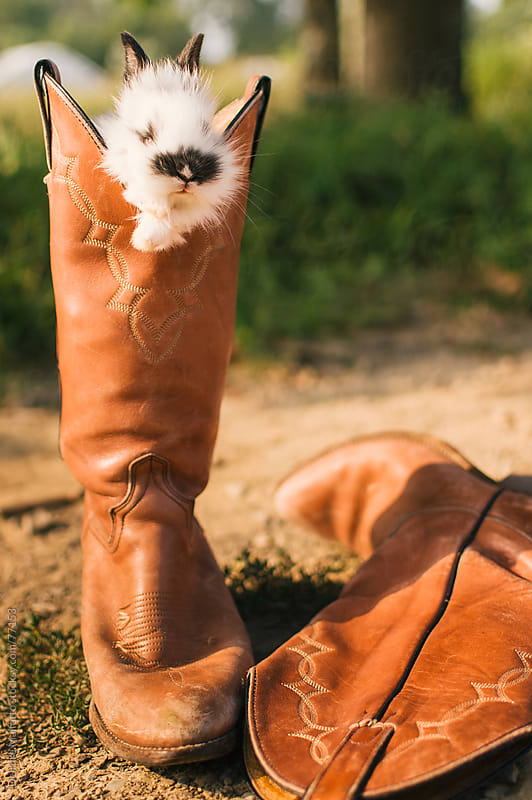 Baby bunny rabbit in a cowboy boot by Deirdre Malfatto for Stocksy United
