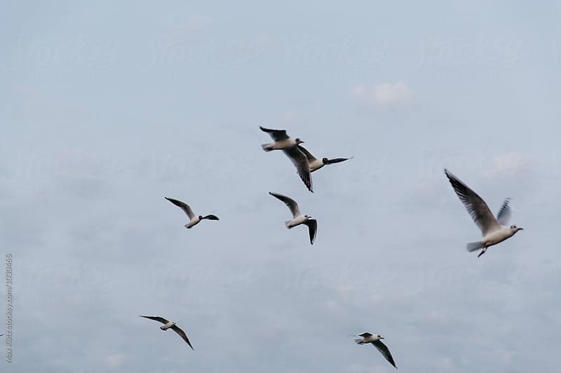 Birds of Galilee by Max Kütz for Stocksy United