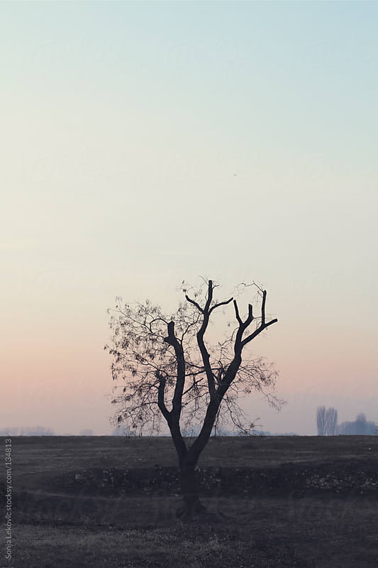lonely tree by Sonja Lekovic for Stocksy United