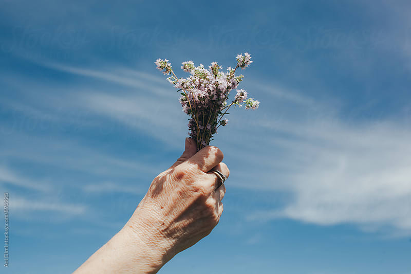 Old woman hand holding Thyme bouquet by Ani Dimi for Stocksy United