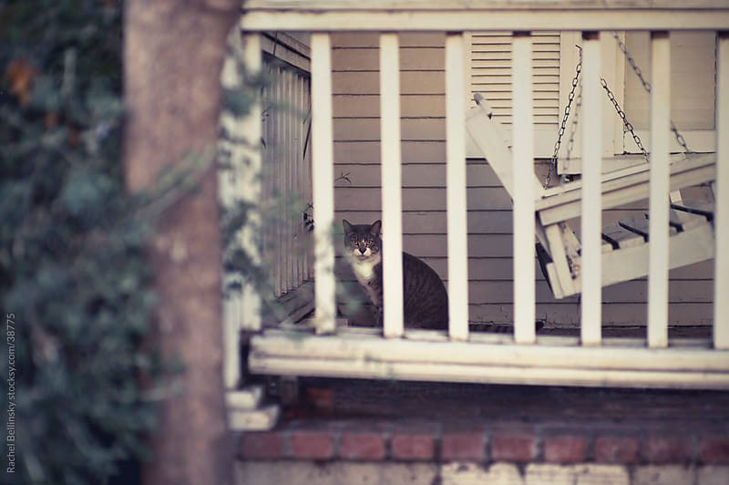 Grey and white cat peeks from behind fenced patio with swinging bench by Rachel Bellinsky for Stocksy United