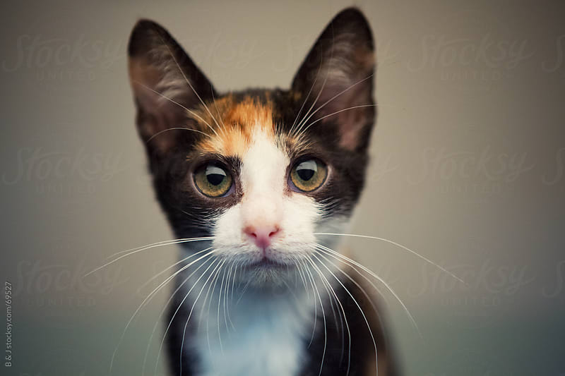 portrait of a serious looking kitten :D by B & J for Stocksy United