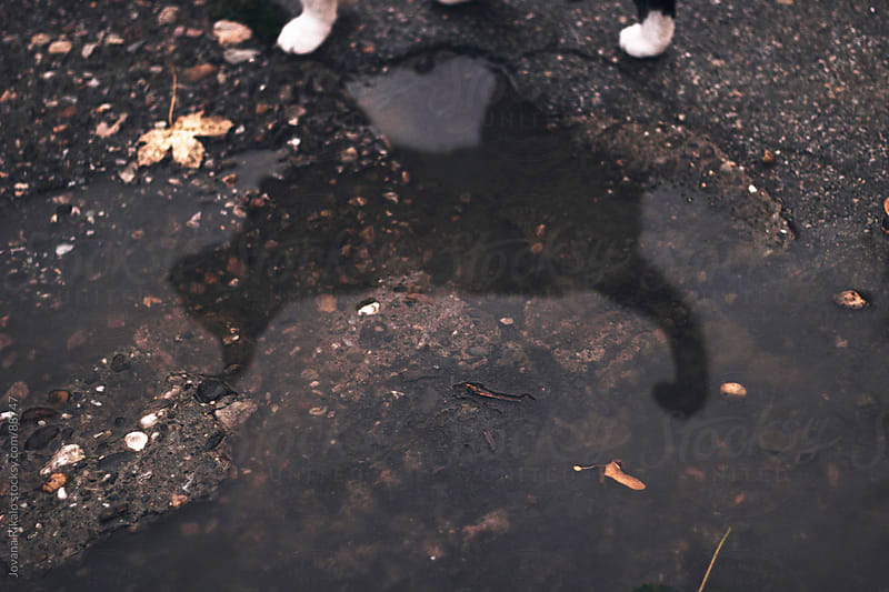 Cat reflection in puddle by Jovana Rikalo for Stocksy United