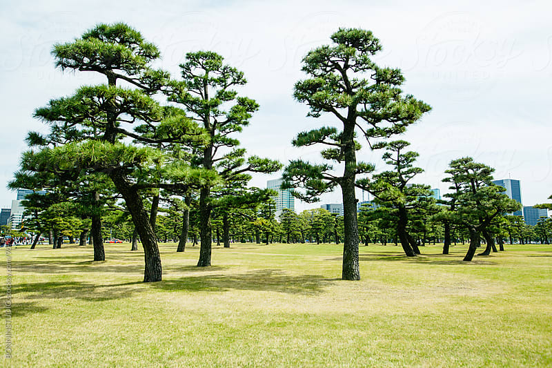 Trees in a park of Tokyo. by BONNINSTUDIO for Stocksy United