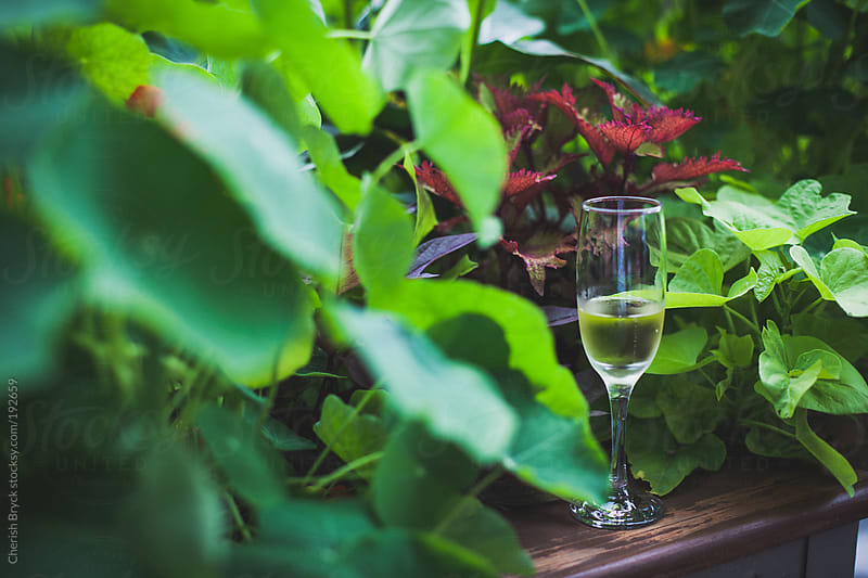 Champagne in the garden. by Cherish Bryck for Stocksy United