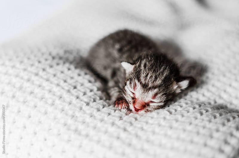 Newborn colorful kitten by Studio Firma for Stocksy United