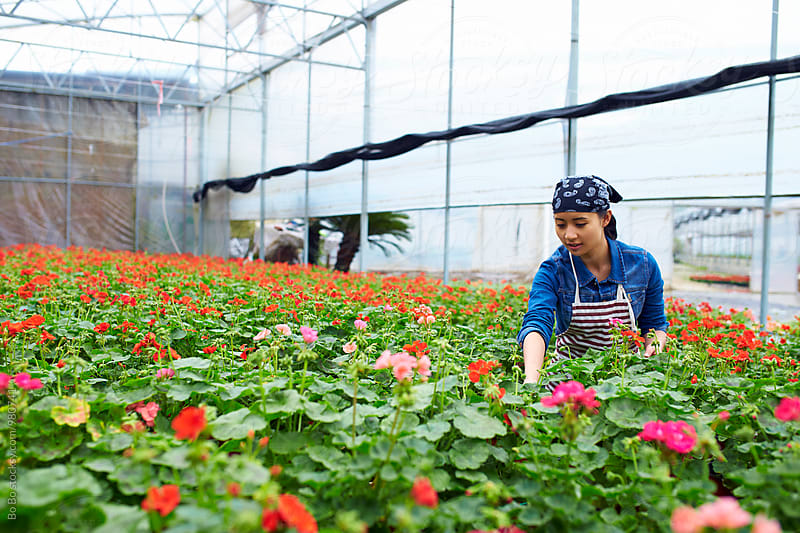 young asian florist working by Bo Bo for Stocksy United