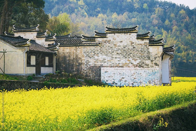 Chinese traditional building in front of the canola flower,Zhejiang,China by Miss Rein for Stocksy United