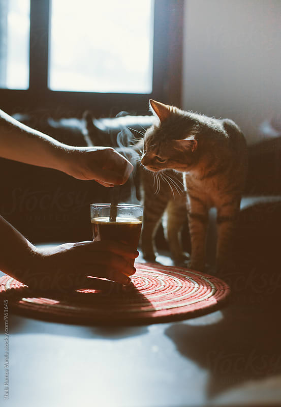 curious cat smelling coffee by Thais Ramos Varela for Stocksy United