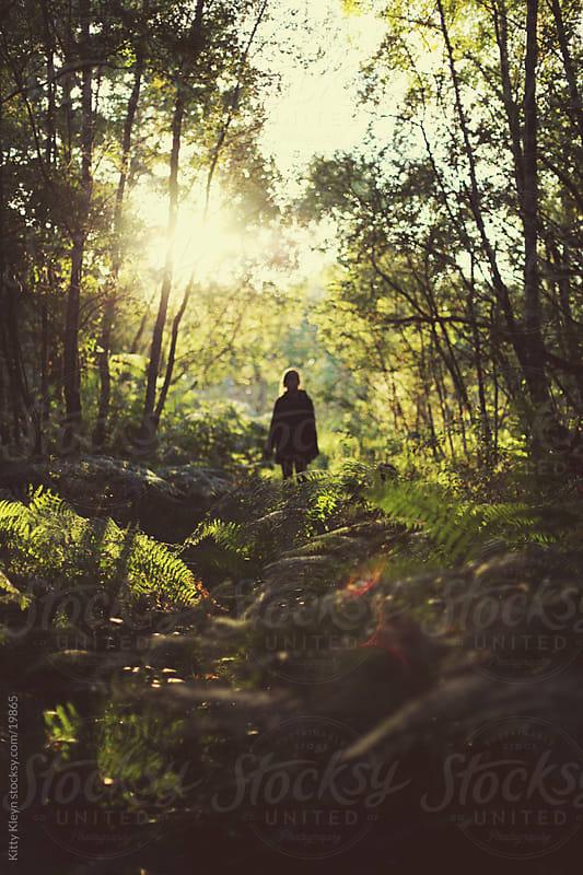 Fern floored forest by Kitty Kleyn for Stocksy United