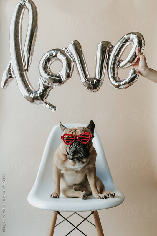 Love Balloons over French Bulldog Puppy Dog Wearing Heart Sunglasses Sitting on Eames Chair
