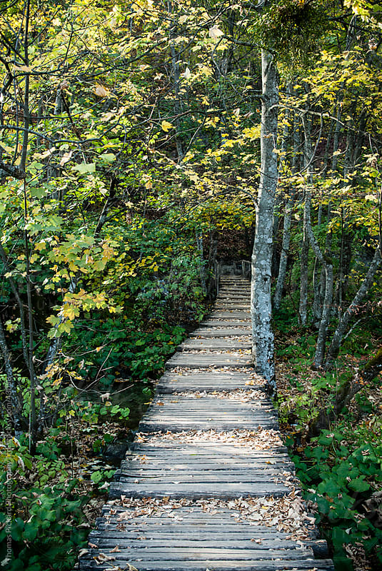 Wooden path way in a forest, Plitvice Lakes National Park, Croat by Thomas Pickard for Stocksy United